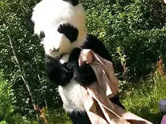 Funny, Panda, Teen toy, Funny sex, Teens outdoor, Teen sex toys