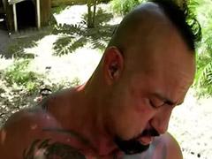 Gay homosex, Behåret og hår