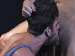 Homosexuál