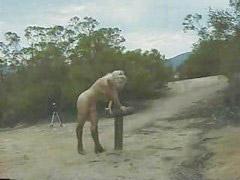 Horse, She rides, Riding horse, Punishment horse, Horse ride, Ride horses